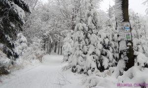 Strefa MTB Sudety zimową porą.