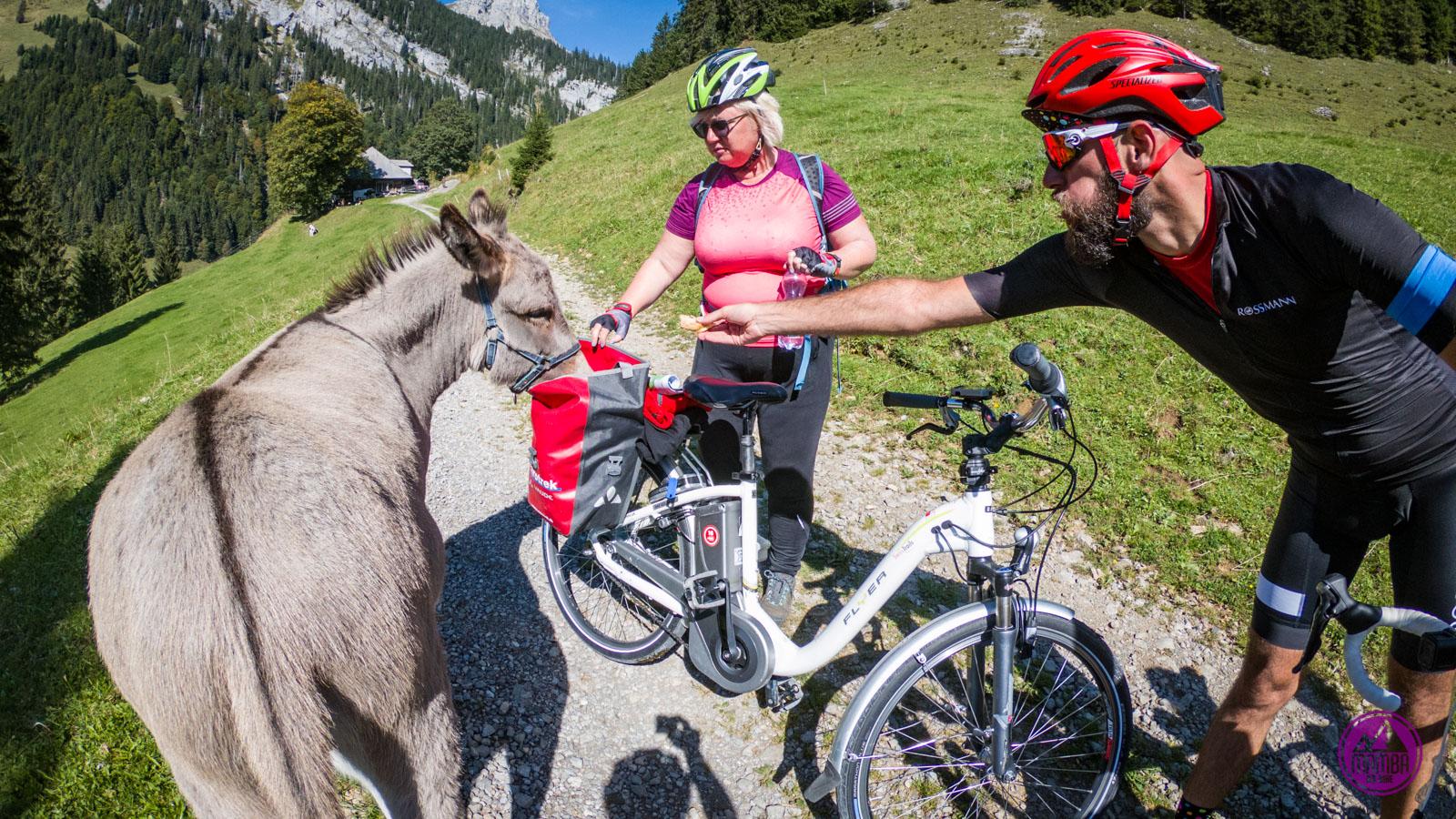 Alpejska Trasa Panoramiczna - osioł