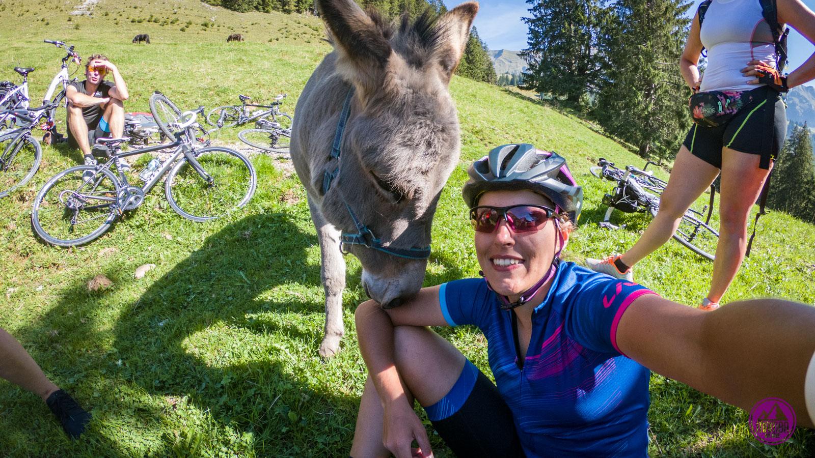 Alpejska Trasa Panoramiczna - selfie z osłem