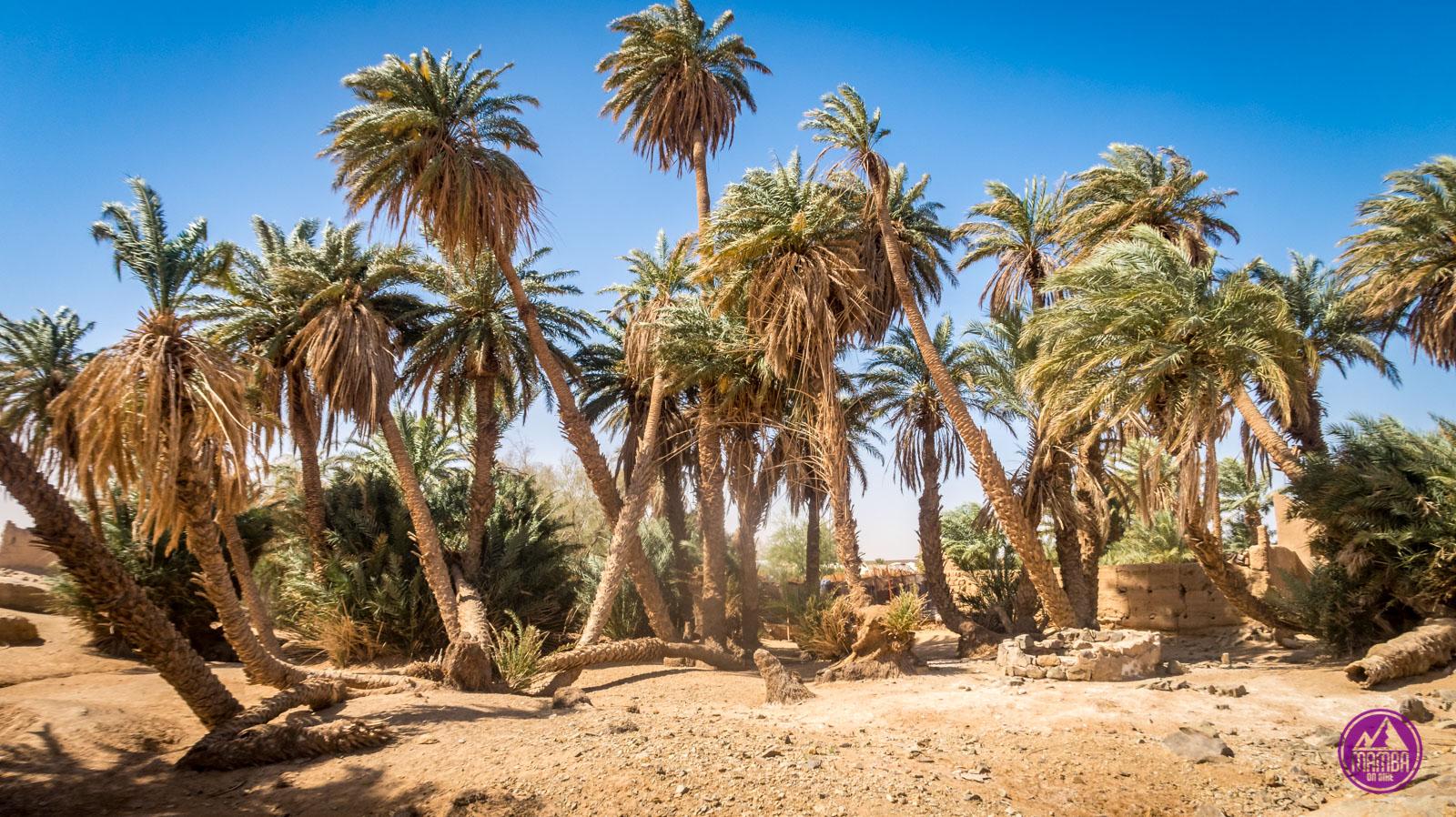Maroko - oaza.