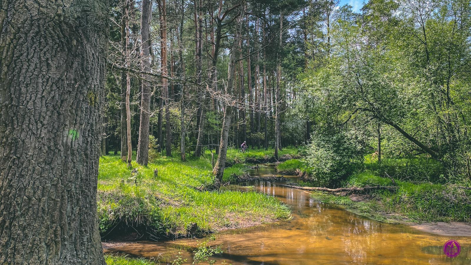 Leśno Rajza