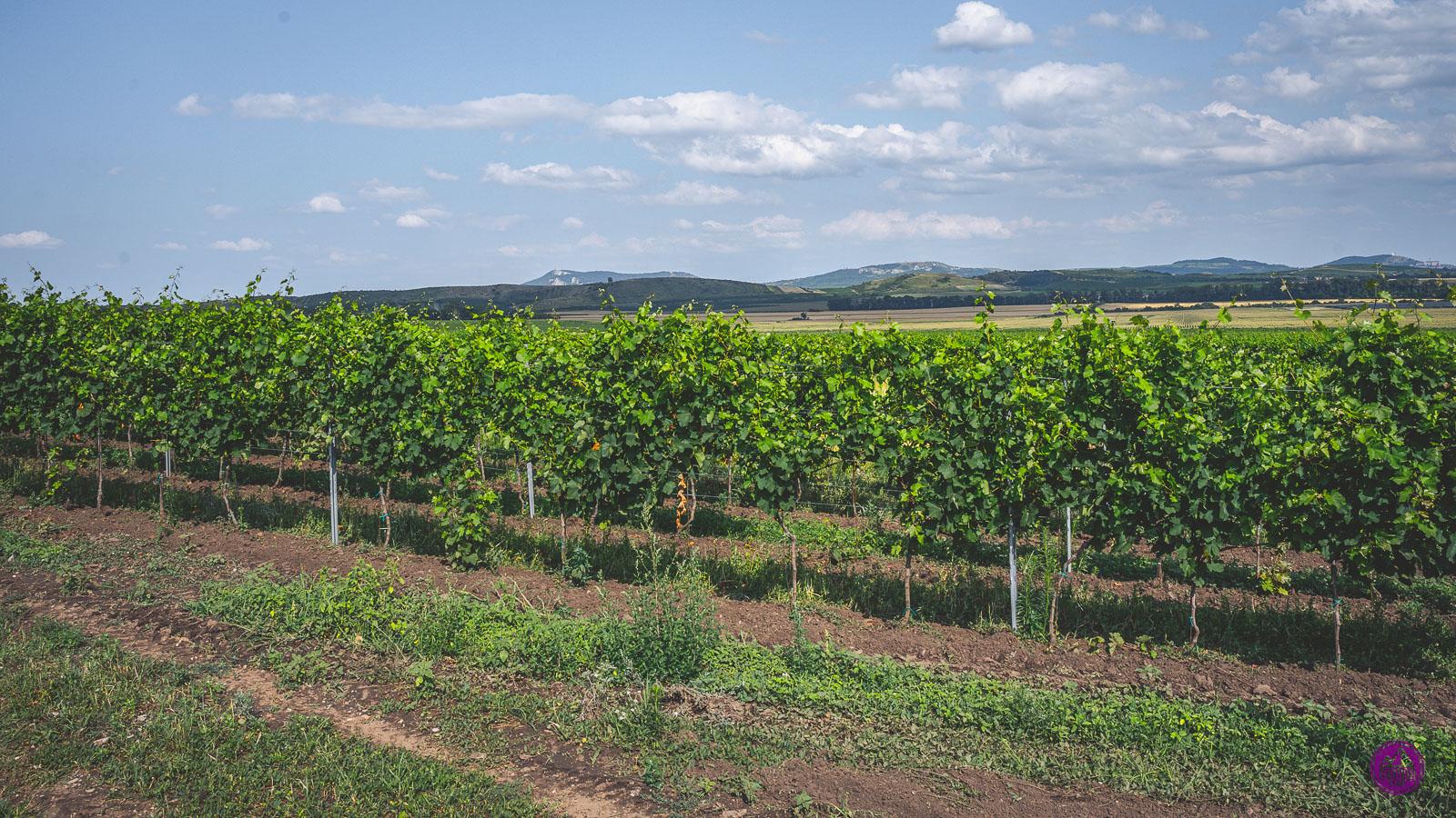Mikulov Wine Trail