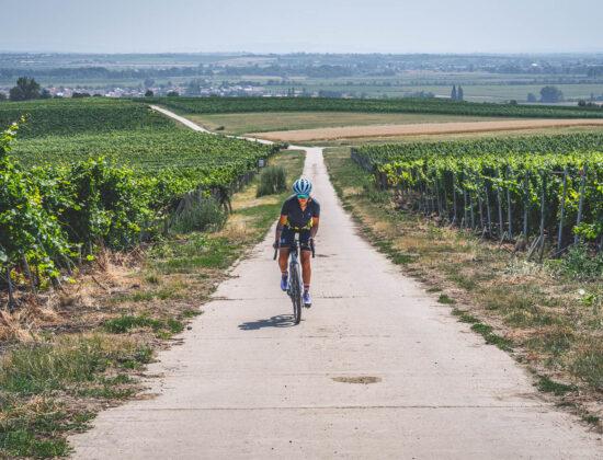 Morawy Południowe rowerem – Velkopavlovická ścieżka winiarska