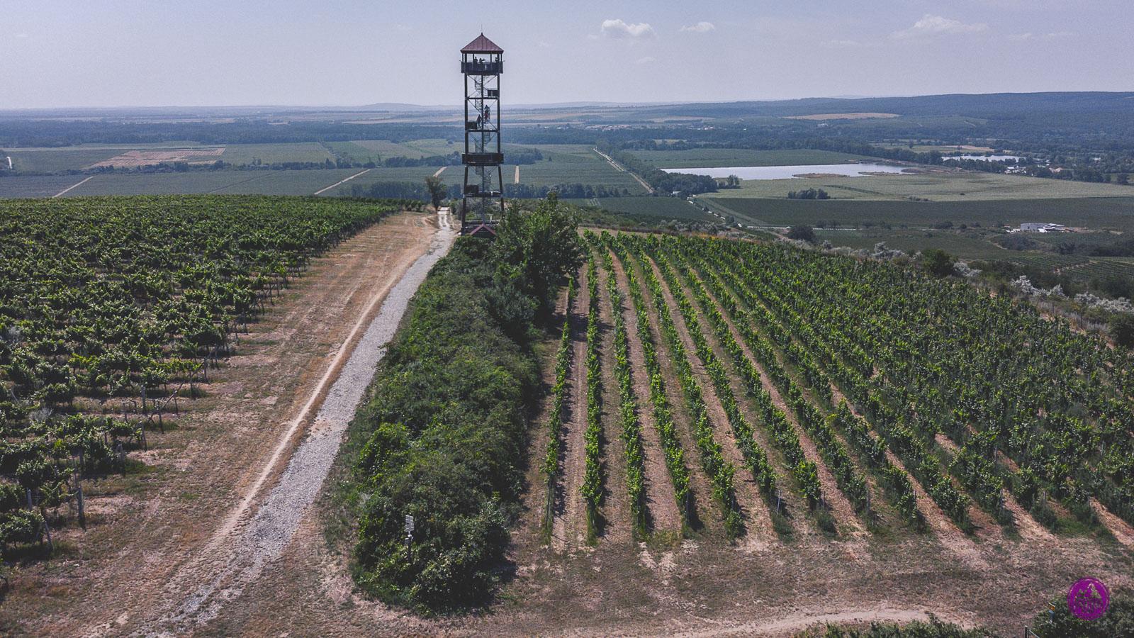 Velkopavlovicka ścieżka winiarska
